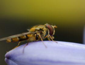 flåter, lus og insektbid